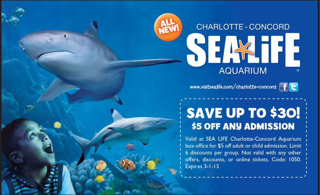 Check Out The Charlotte Concord Sea Life Aquarium